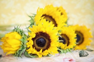 sunflowers-2191627_640.jpg
